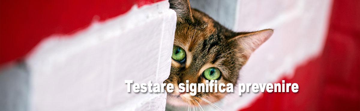 sintomi gatto toxoplasmosi